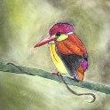 Rufous-Backed Kingfisher