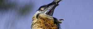 https://faunafocus.com/home/may-2018-bearded-vulture/#jp-carousel-7901