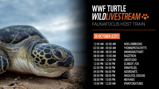 FaunaFocus Sea Turtle Host Train - Schedule