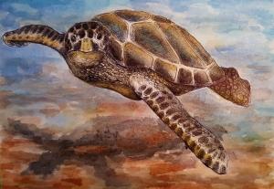 Sea Turtle Host Train