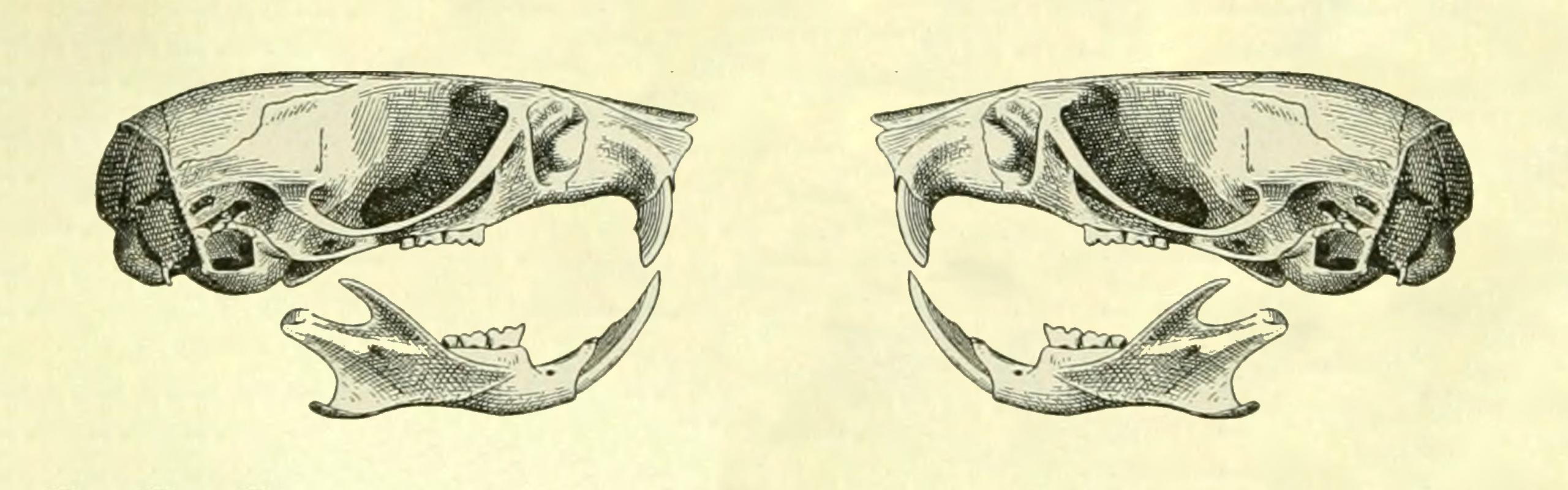 FaunaFocus